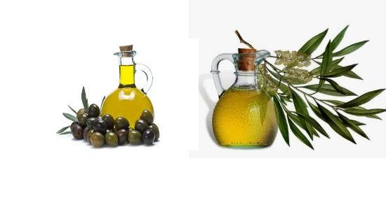 Olive Oil Tree Oil